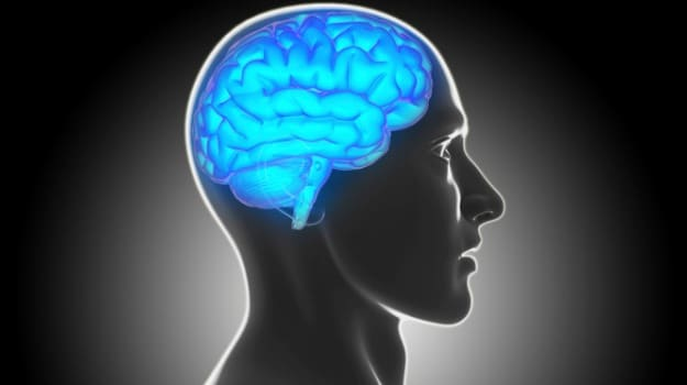 High-Fat Diet Can Dull Brain's Dopamine System
