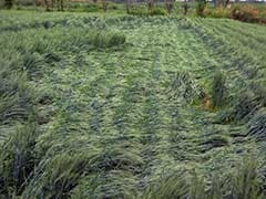 Crop Sowing Accelerates on Surplus Monsoon Rains