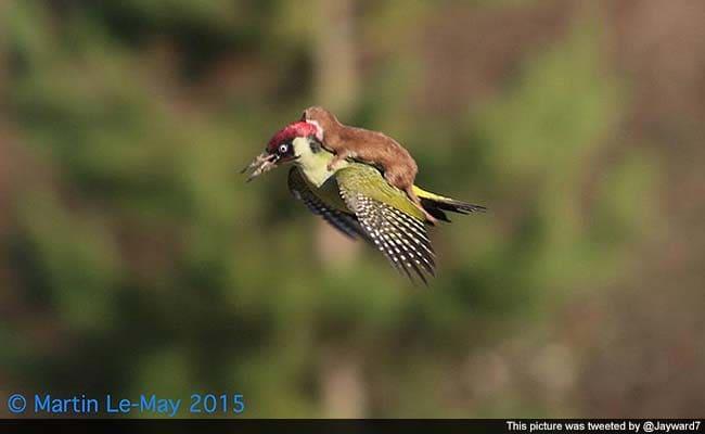 woodpecker lift