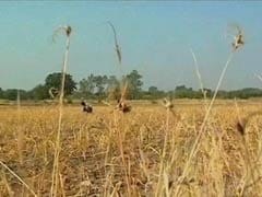 New Crop Insurance Scheme Approved By Cabinet