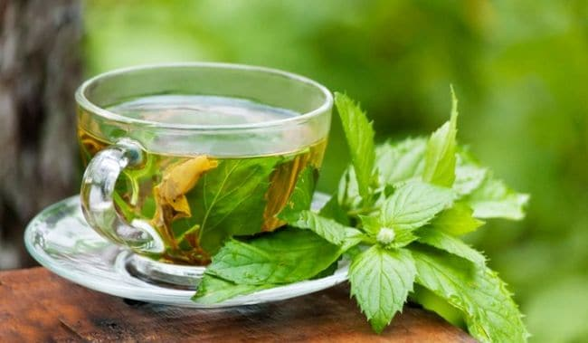 Medicinal Benefits Of Tulsi Green Tea