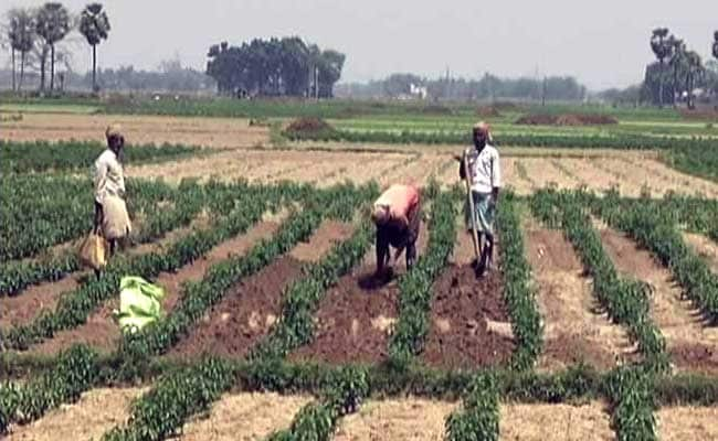 India Matters: Fields of Despair