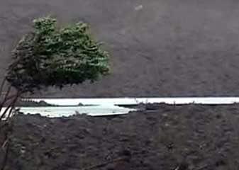 Farmer suicide cases in Maharashtra