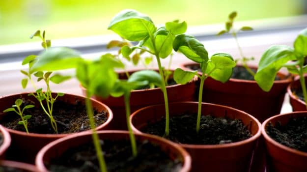 Hooked on Greens: 10 Veggies That You Can Grow at Home