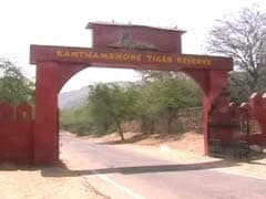 Tiger Kills Forest Guard at Rajasthan's Ranthambore Reserve