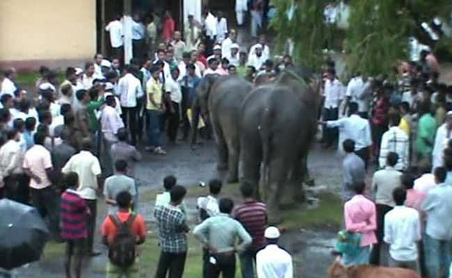 2 Elephants in an Assam Court in Cross-Border Custody Battle