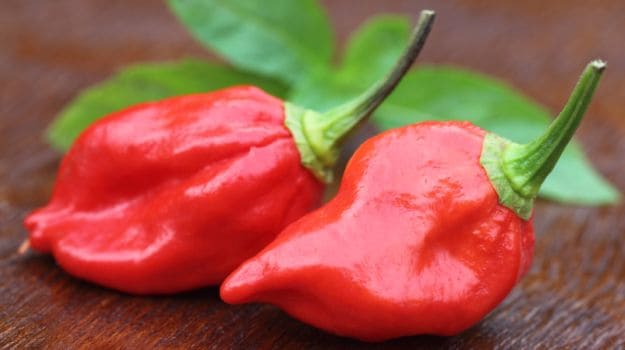 many-shades-of-red-chillies-of-india-from-sizzling-sensations-to-mild-marvels-6