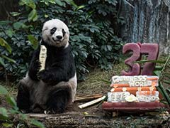 Hong Kong Giant Panda Jia Jia Becomes Oldest Ever