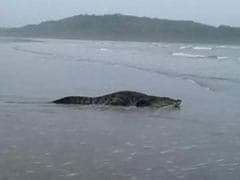 'Tourism Rival' Blamed for Croc on Goa Beach. Seriously.