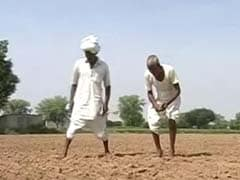 Farmer Suicides Rising in Punjab. Here's Why.