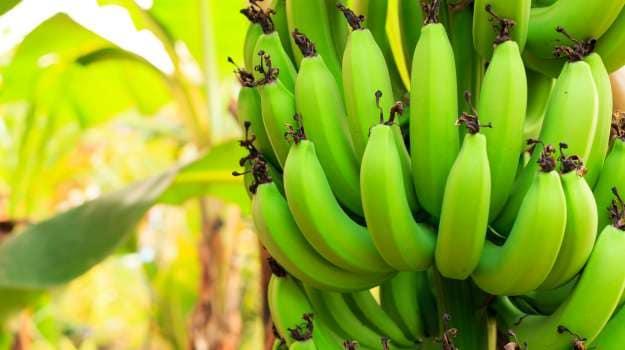 10 Best Raw Banana Recipes
