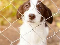 Kerala Panchayat Denies Involvement in Killing of Stray Dogs