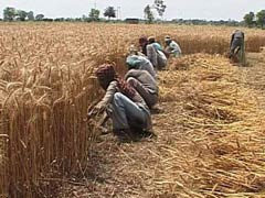 Andhra Pradesh Government to Help Farmers Suffering Crop Loss: Minister