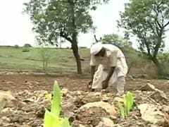 Farmer Suicides on Rise as Marathwada Reels under Severe Drought