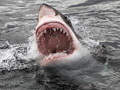 American Surfer Injured In Bali Shark Attack