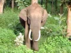 Elephant Run Over By Train In Tamil Nadu