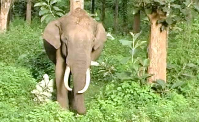 Rejuvenation Camp For Temple Elephants Begins In Tamil Nadu
