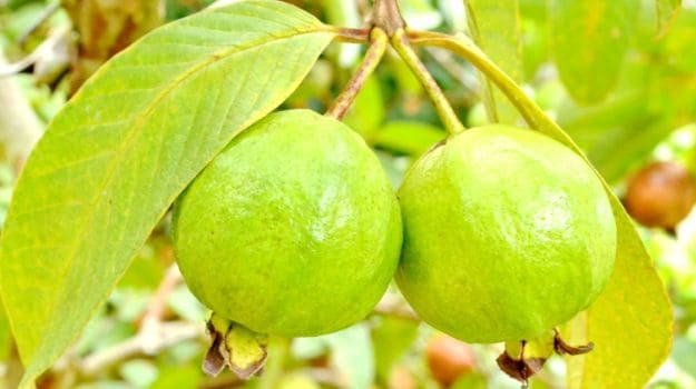 15 Amazing Guava Benefits: Heart Healthy, Weight Loss Friendly and ...