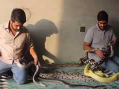 These Two Pakistani 'Python Brothers' Live With Over 100 Snakes