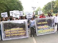 Who's Destroying Mangroves? Mumbai Residents Allege Government Apathy