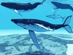 Japan Whaling Fleet Set to leave for Antarctic