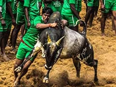Union Minister Pon Radhakrishnan Hopeful Of Holding Jallikattu Next Month