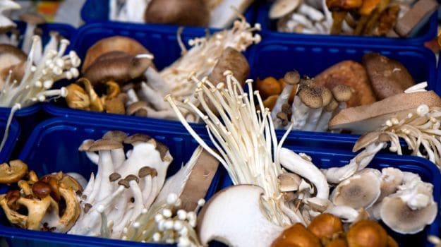 A Beginner's Guide to Picking Mushrooms