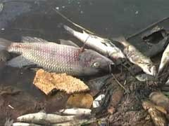 A Mysterious Pile of Dead Fish Leaves Navi Mumbai Authorities Baffled