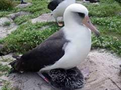 World's Oldest Bird is Ready to Do the Unthinkable - Have Yet Another Baby