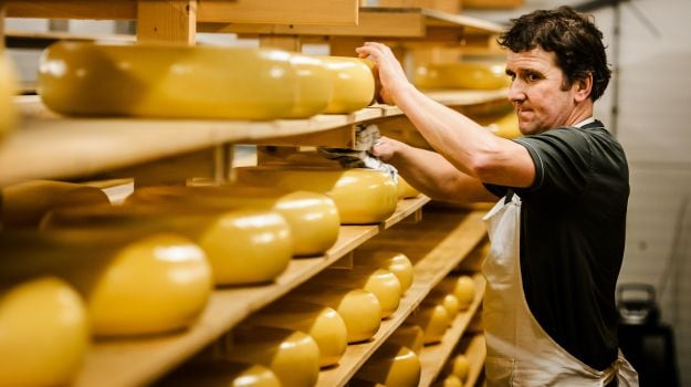 Who Moved my Cheese? Spate of Burglaries Baffle Dutch