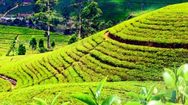 Eating in Darjeeling: The Hotspot of Tibetan, Nepalese and British Food