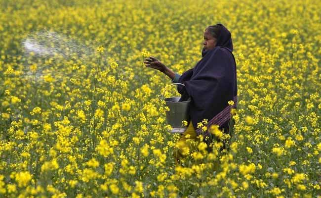 Kerala Passes Resolution Against Genetically Modified Mustard