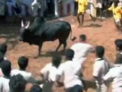 Jallikattu: Tamil Nadu Farmers Still Hopeful Despite Supreme Court's Stay On Sport