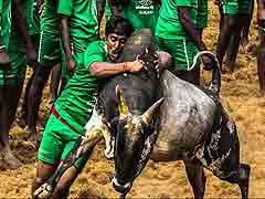 Jallikattu Issue Echoes In Tamil Nadu Assembly, DMK Stages Walkout
