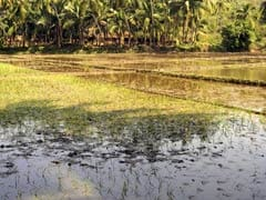 'Poor Monsoon, Global Agricultural Price' to Limit Rural Demand