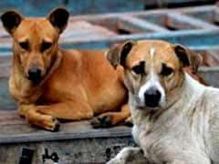 Street Dogs Help Delhi Police Crack Murder In 8 Hours