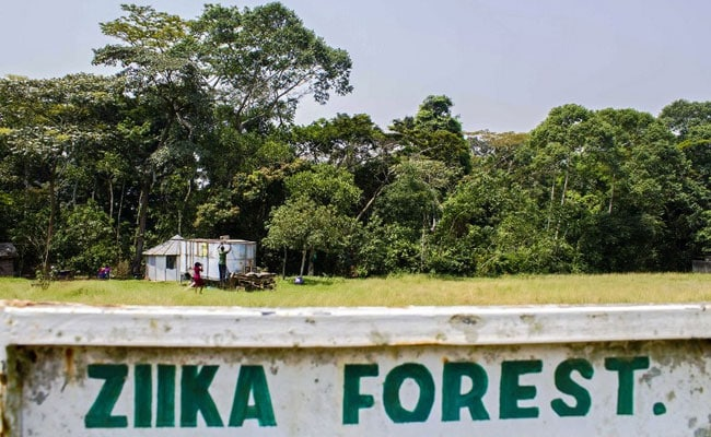 Into Zika's Heart: The Ugandan Forest Where Virus Was Found