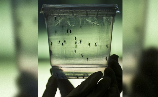 World's First Zika Virus Vaccine Made In India, Claim Scientists