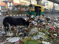 Delhi Government Asks Lieutenant Governor to Resolve Garbage Crisis