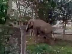 पश्चिम बंगाल के सिलीगुड़ी में उन्मादी हाथी का खौफ, कई घरों को नुकसान पहुंचाया