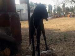 छत्तीसगढ़ : जज की शिकायत पर बकरी और उसका मालिक गिरफ्तार