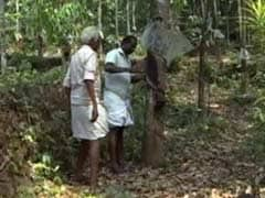 Ahead Of Elections, Kerala's Rubber Crisis Turns Political