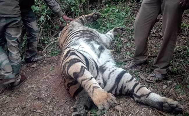 10-Year-Old Tiger Found Dead Near Tamil Nadu's Kodaikanal
