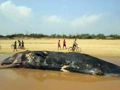 Another Dead Whale Washes Ashore, This Time In Odisha