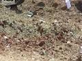 Tamil Nadu Man Killed By 'Meteorite' May Be First In 200 Years