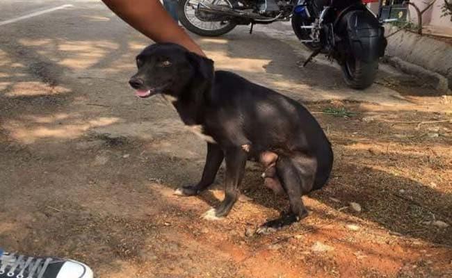 Rescue Dog Maul