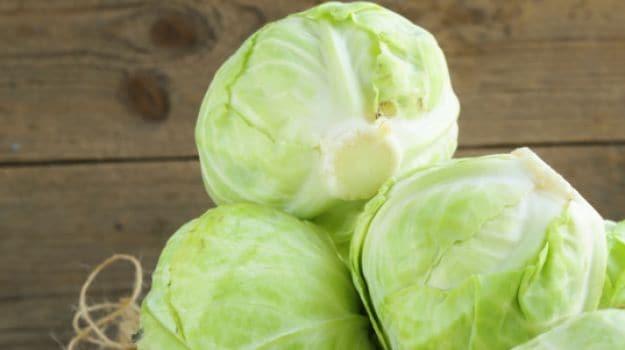 cabbage 625