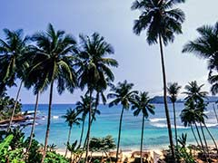 Coconut Tree Not Declassified, Goa Government Tells Assembly