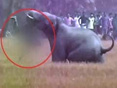 Elephant Kills Man By Flinging Him To The Ground, Trampling Him