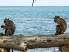 Scientists Create Antibody Cocktail That Cures Ebola-Infected Monkeys: Study